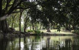 Лес природы Стоковые Изображения