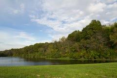 Лес прудом Стоковое Изображение RF