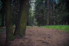 Лес пути весной зеленый Стоковое Фото