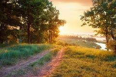 Лес реки дороги ландшафта лета Стоковая Фотография RF