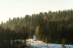 Лес ринва дороги Стоковая Фотография
