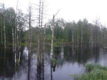 Лес России стоковое изображение rf