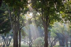 Лес свежих зеленых лиственных деревьев обрамленных листьями, w Стоковое Изображение RF