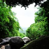 Лес сердца Стоковое Изображение RF