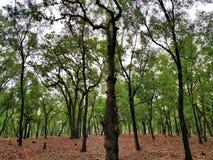 Лес сети стоковая фотография