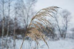 Лес сибиряка зимы Стоковые Изображения