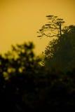 Лес силуэта в заходе солнца стоковое изображение rf