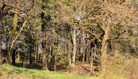 Лес сказки в Aberfoyle Шотландии Стоковое Фото