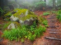 Лес сказки Стоковое Изображение