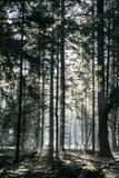 Лес сказки стоковая фотография rf