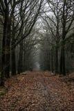 Лес сказки стоковое фото rf