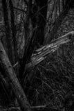 Лес сказки стоковая фотография