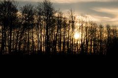 Лес сказки стоковые фотографии rf