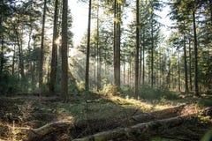 Лес сказки стоковые изображения rf