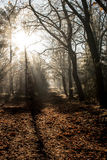 Лес сказки стоковые фото