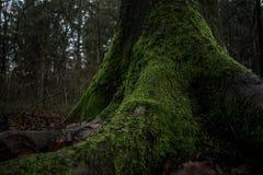 Лес сказки стоковое изображение rf