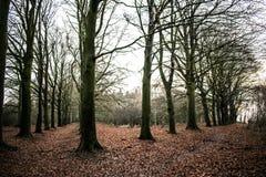 Лес сказки стоковые изображения