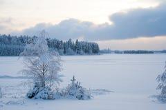 Лес снега в зиме Стоковые Изображения
