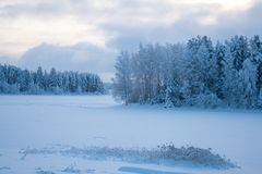 Лес снега в зиме Стоковое Фото
