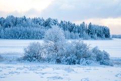 Лес снега в зиме Стоковое Изображение