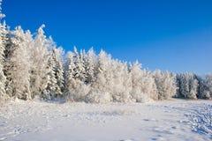 Лес снега в зиме Стоковая Фотография