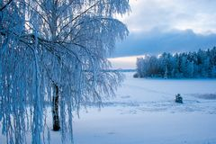Лес снега в зиме Стоковые Фотографии RF