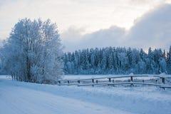 Лес снега в зиме Стоковые Изображения RF