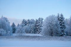 Лес снега в зиме Стоковое Изображение RF