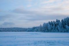 Лес снега в зиме Стоковая Фотография RF