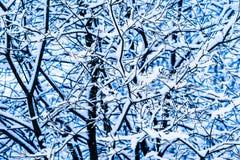 Лес 11 снега зимы Стоковые Изображения RF