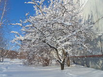 Лес снега зимы Стоковые Изображения