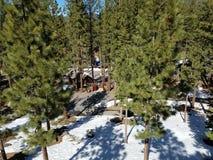 Лес снега с кабиной стоковые фото