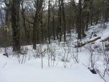 Лес снега Стоковые Изображения RF