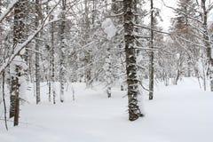 Лес снега Стоковая Фотография