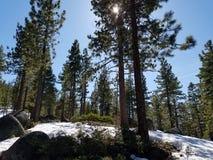 Лес снега стоковое фото