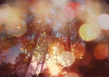 Лес снизу с солнечным светом Стоковые Изображения RF