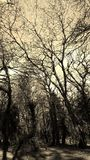 Лес собаки colly Стоковая Фотография