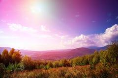 Лес сосны Стоковые Изображения RF