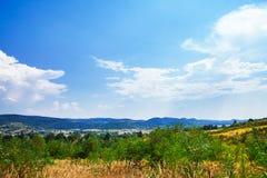 Лес сосны Стоковая Фотография RF