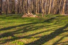 Лес стога швырка весной с селективным фокусом Стоковое фото RF