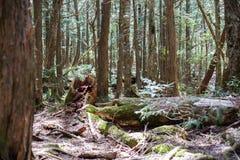 лес суицида стоковое изображение