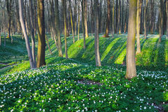 Лес с белыми цветками Стоковое фото RF