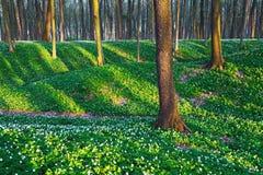 Лес с белыми цветками Стоковые Изображения