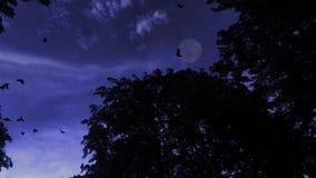 лес с вороном и луной сток-видео