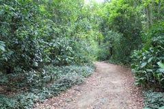 Лес следа Стоковые Изображения