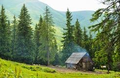 Лес с елями Стоковое фото RF