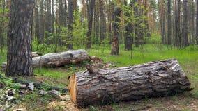 Лес с журналом Стоковое Изображение RF