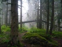 Лес Словакия Стоковая Фотография