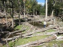 Лес с отрезком деревьев Стоковое Изображение RF
