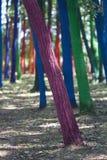 Лес с покрашенными деревьями Стоковое Изображение RF